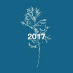 Playlist art flower 2017